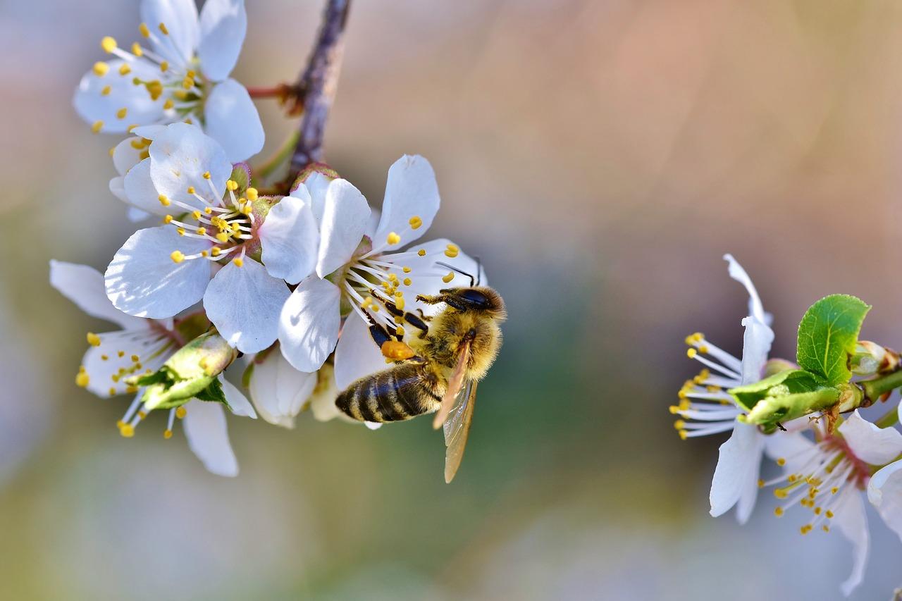 ?? Unsere Bienen ??